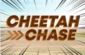 Boyle Bingo Cheetah Chase